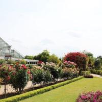 野田にある清水公園花ファンタジアの「ローズフェスタ2017」