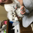 シルバーの子猫ちゃん活発です😽