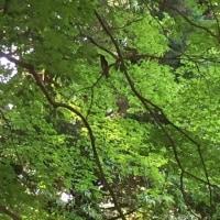 5月の日記29 カワラヒワ親子愛