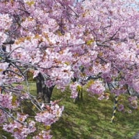 春は進み、甲子園も進む。そして春期講習会も出発進行!