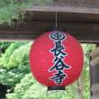 神奈川県鎌倉市長谷にある長谷寺では、キキョウが花をよく咲かせています