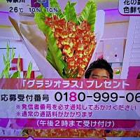 6/26・・・めざましテレビお花プレゼント・本日2時まで