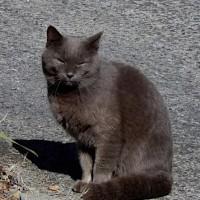 近所の飼い猫?