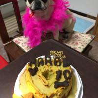 マロたん 10歳の誕生日