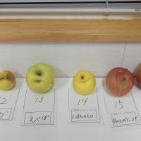 面白りんごー変形りんご特集ー