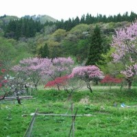 八峰町の桃源郷「手這坂集落」