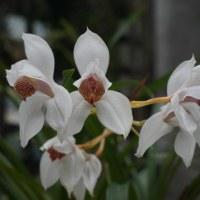 冬の植物園38(ヨシ)