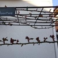 """LA VIE EN ROSE""の庭に春がやって来て"