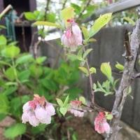 4月の庭。。。その3