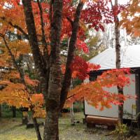 八ヶ岳、今年の紅葉