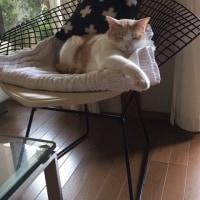 猫とチェア
