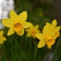 3月の花とにゃん