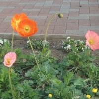 花見15分!17時の公園はきれいだったけど、ちょっと寒かった