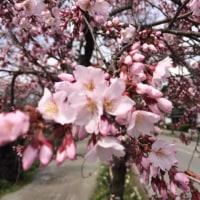 花は咲く(╹◡╹)