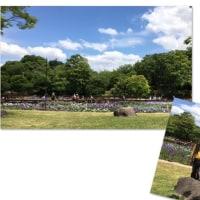 大阪府枚方市 山田池公園