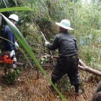 機動隊の力を借りて強行される森林破壊