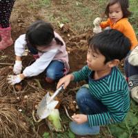 10/23 大久保農園報告 WAKUWAKUつづき サイトモ掘り