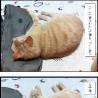 茶トラ猫、つくし君の寝相。