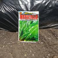 野菜の苗木を植える