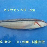 笑転爺の釣行記 10月24日☁ 長瀬・久里浜
