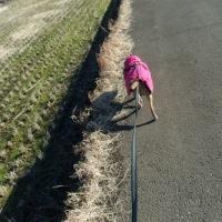 飼い主走れば、犬さんは歩く‼?