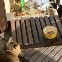 クロスケをいじめる猫はいない?