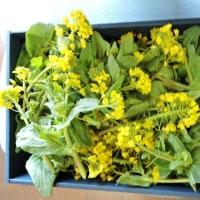 菜の花とどら焼き