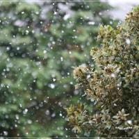 本当に雪が降っちゃった 。。。(゚ω゚&#59;)!