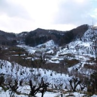 冬の花見山公園