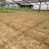2017年5月3日 今年も、ナスを植えました。また、マクワウリの試験栽培を始めます。