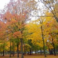 紅葉狩り - 小雨のHigh Park