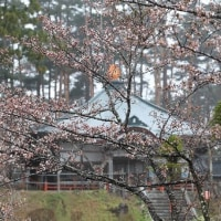 桜だより2017