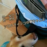 2月12日(日)…DogLifeレッスン&グラスアート教室