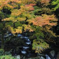 野原川の紅葉