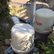 本日のアスパラ。散水自動化工事進行中