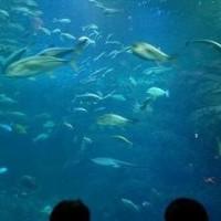 外出レクで江ノ島水族館に!