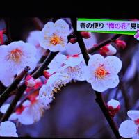 2/28 森田さんの 梅を見られるところ