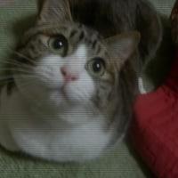川柳 猫と戯れる