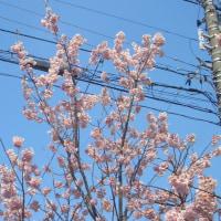 花見シーズン到来