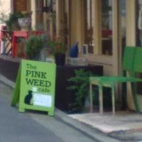 ピンクウイードさんラストスパート