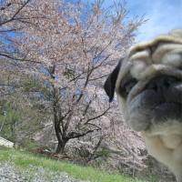 春のまめ太郎