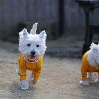 今更ですが・・・1月の白犬~♪