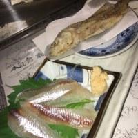 最近の「聡咲」〜2016・柳葉魚刺しの季節がまた来る〜