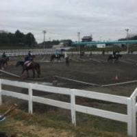 馬の仕事につくために アニベジ奮闘記 エピソード206