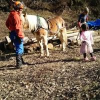 木材の馬搬