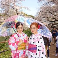 桜!素敵な日本20170412