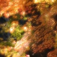 紅葉を多重露光で