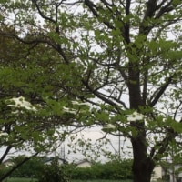 サクラ公園で賛美 🌸 2017年4月21日