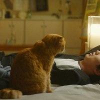 「想像ネコ~僕とポッキルと彼女の話~」