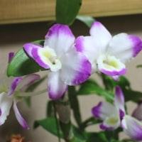 玄関の花・・Ⅱ..